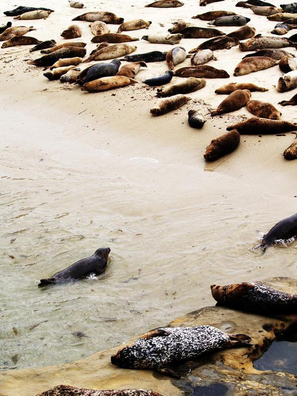 seals and seals by crazytmac