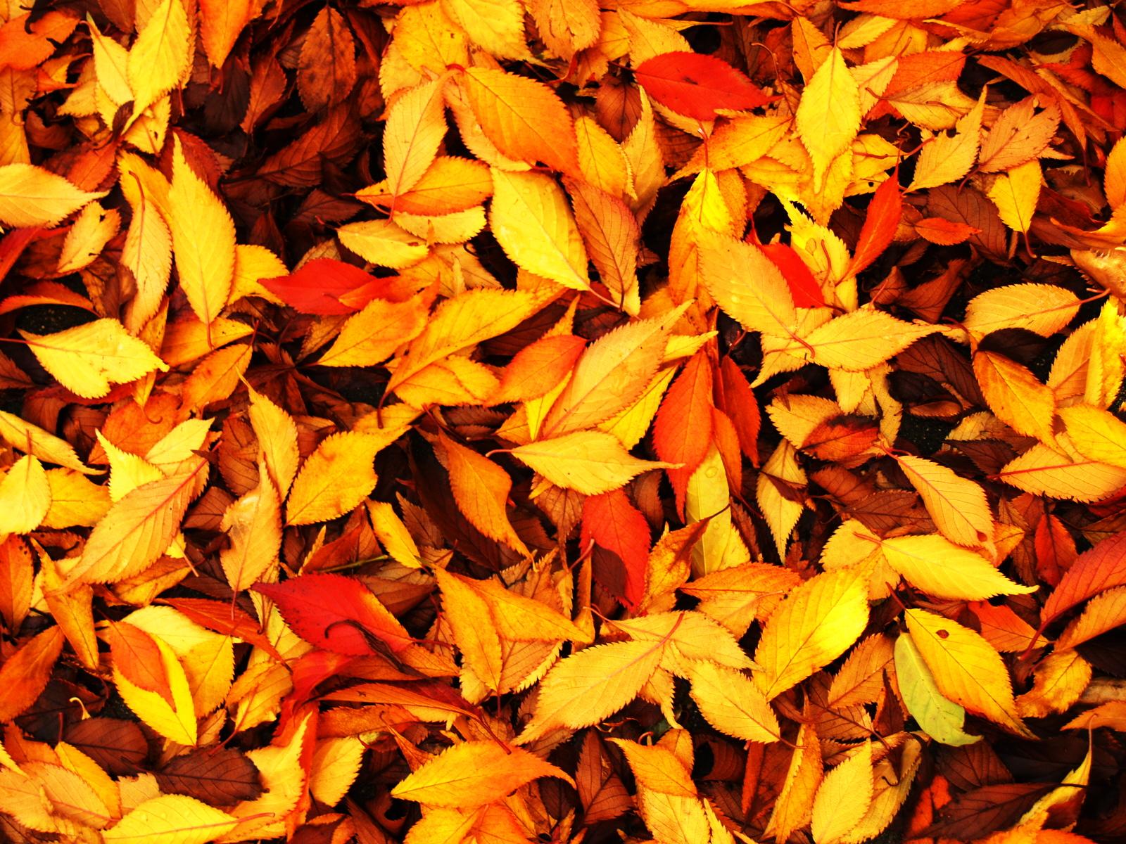 Image gallery hojas de invierno for Arboles en invierno