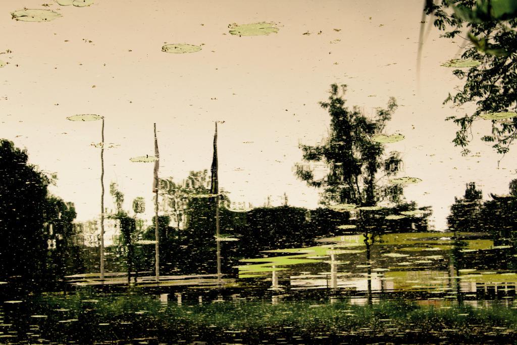 Blurry summer by sheapofdestruction