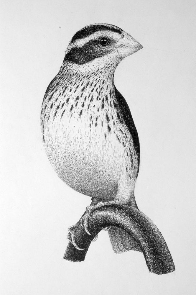 Bird by Rens-Ink