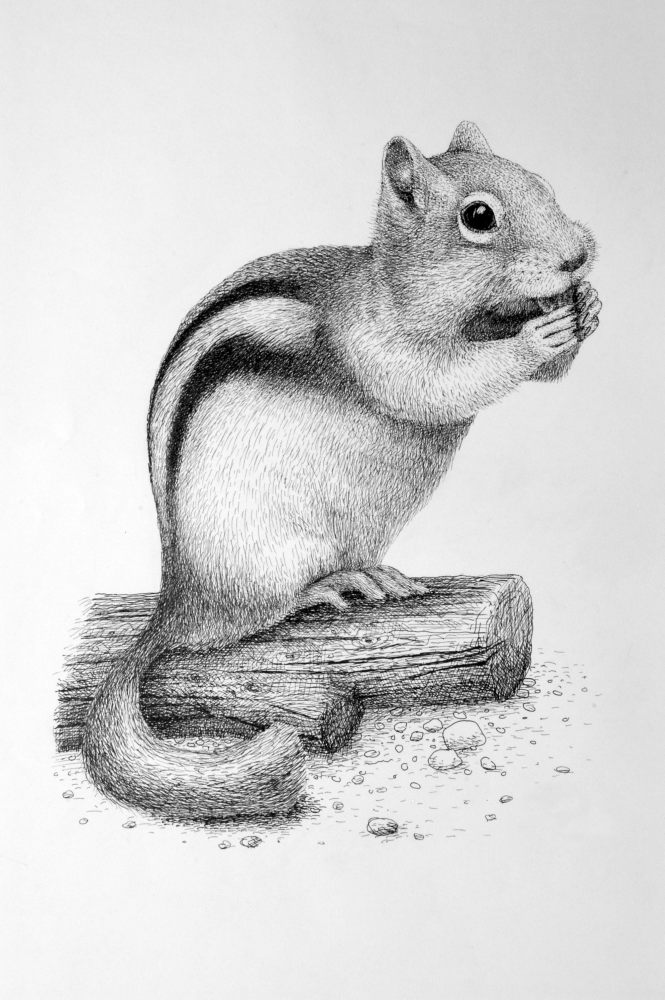 Squirrel by Rens-Ink
