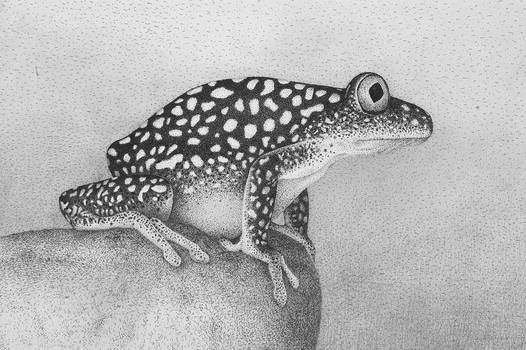 Frog-03