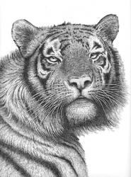 Tiger 2011