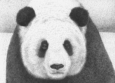 Panda 2011