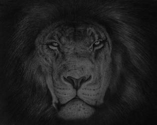 Lion-2018