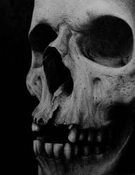 Human Skull-2