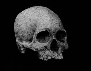 Human Skull-1