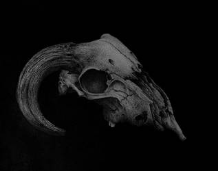 Goat Skull-2
