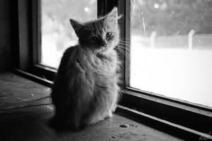 Abandoned cat 2
