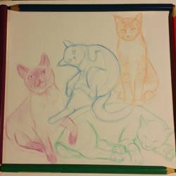 Cat sketches by creativecatzz