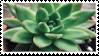 Succulent stamp by KarkatsPants