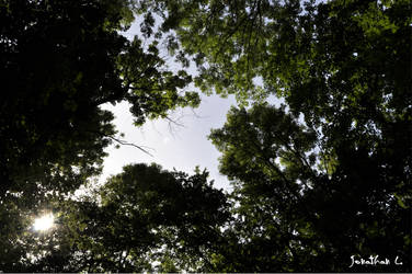 Wald-Dach by Lions4thDimension