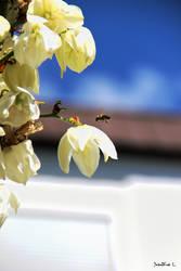 fliegende Biene by Lions4thDimension
