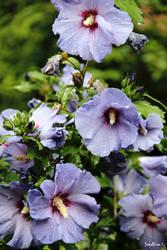 Blumen by Lions4thDimension