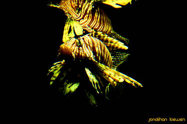 Lion Fish by Lions4thDimension