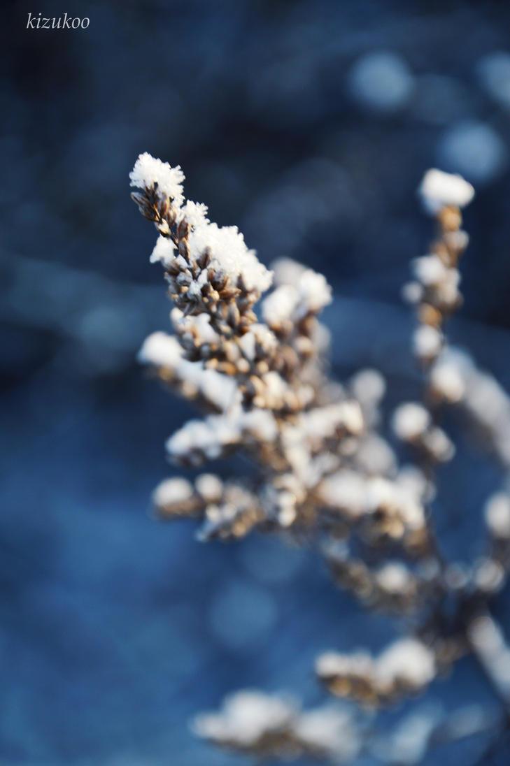 Snowy by kizukoo