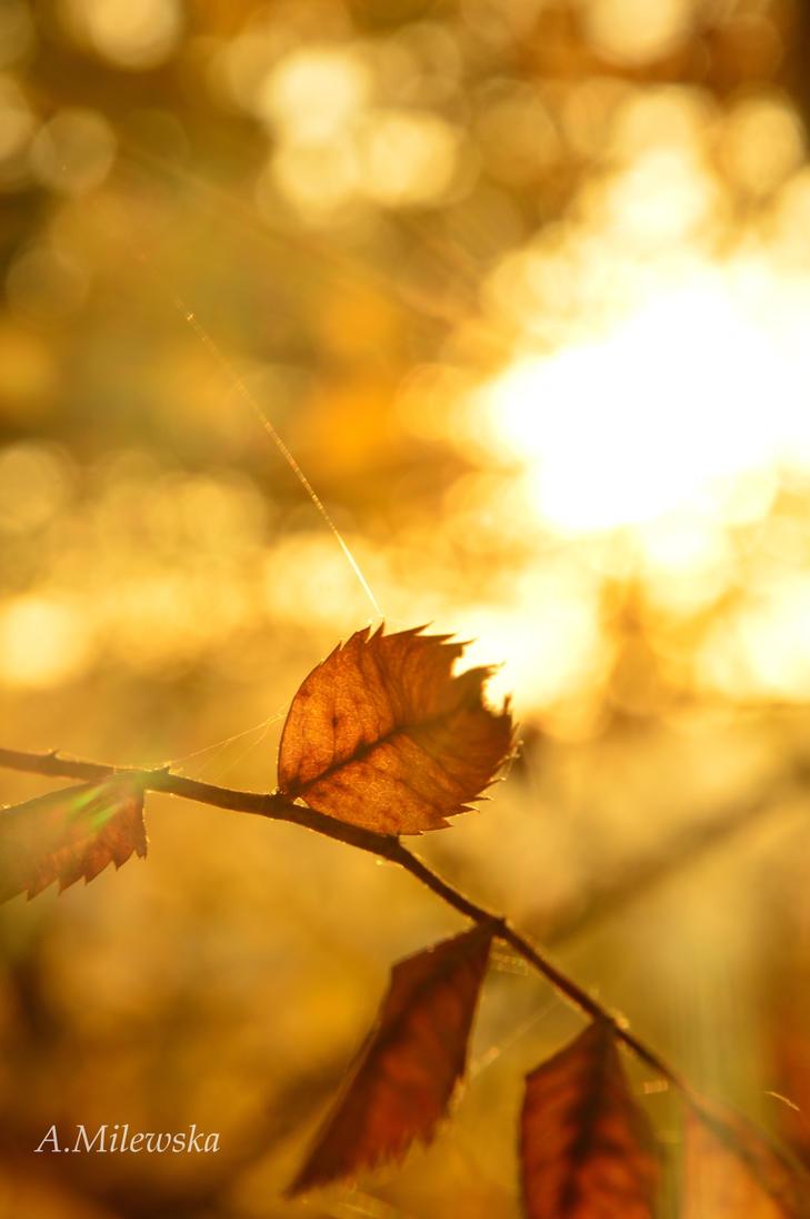 ready to fall by kizukoo