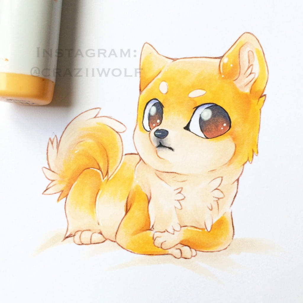 All Information About Doge Drawing Pictures Catfactsblog