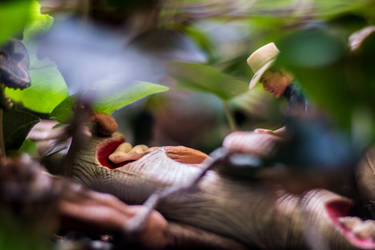 Jurassic Park Toy Photo by arturodelmar