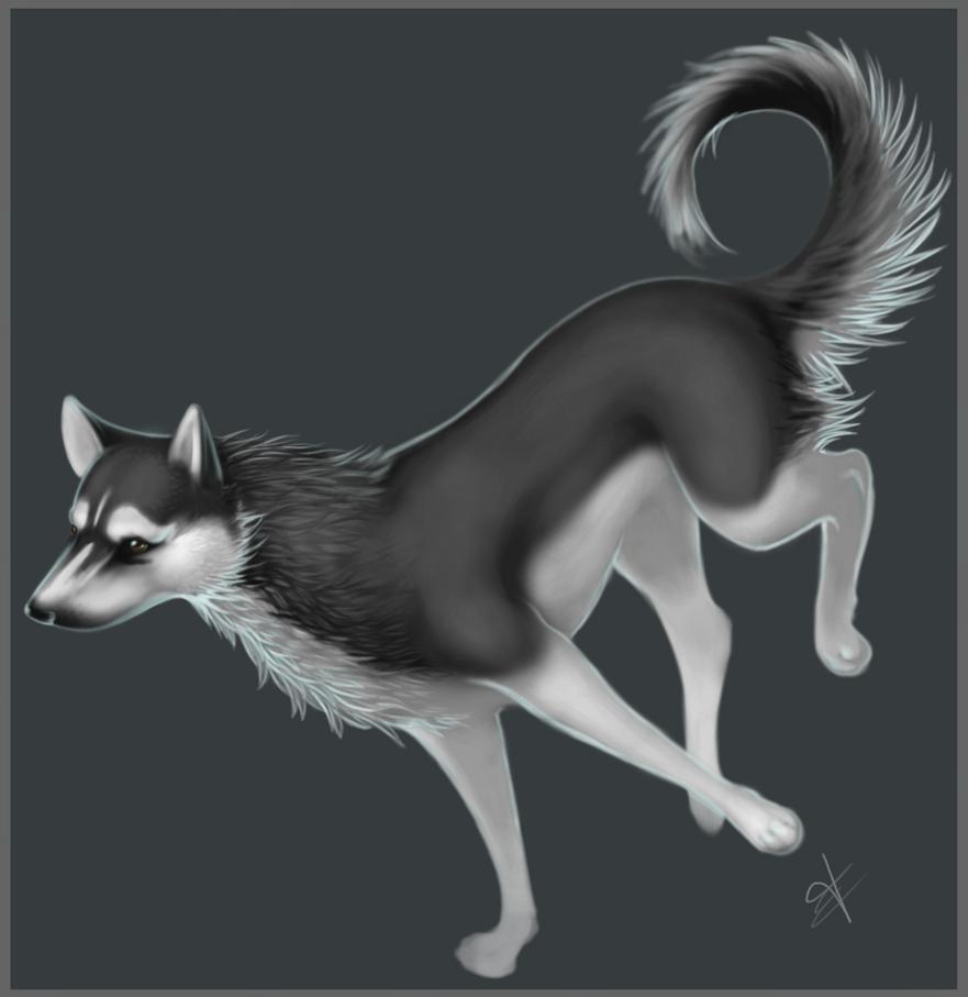 Loki by PuppiesAndSunshine