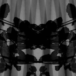 Fledermaus mit Schnorres