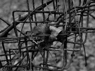 Mitgefangen Mitgehangen