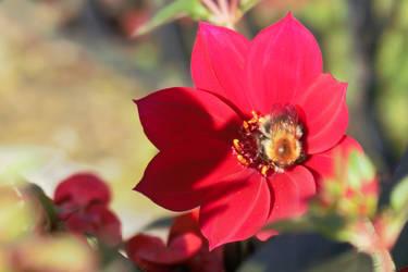 Bee by xephera