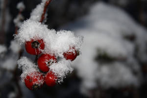 winterwonderland III by Pimthida
