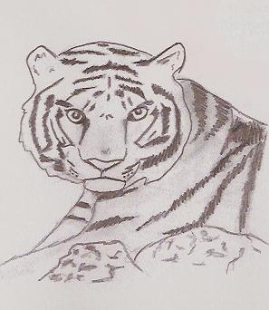 Tiger by PikaTony