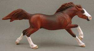 Little Mustang Stallion