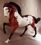 Corvus- Mustang Stallion