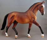 Acolyte, Warmblood Stallion