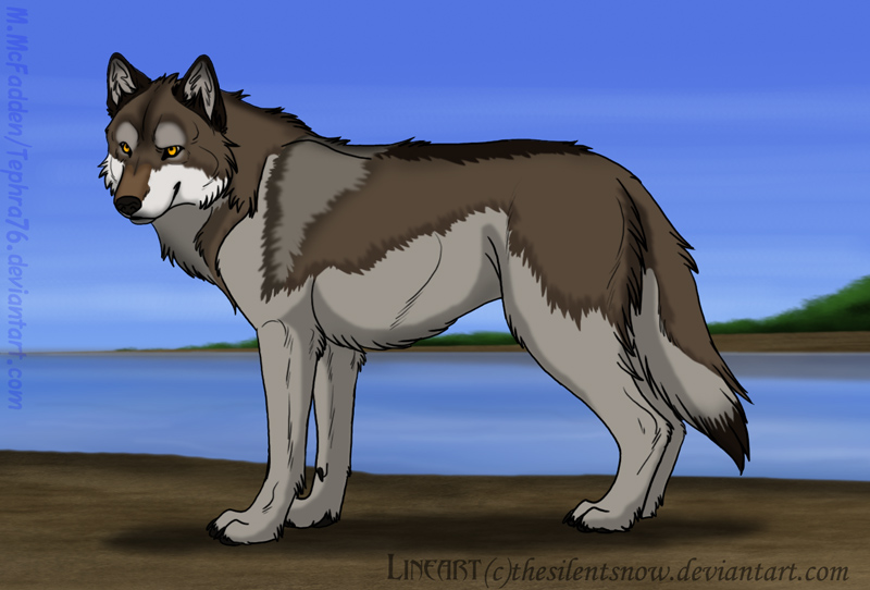 Wolf Lineart : Colored lineart coastal wolf by tephra on deviantart