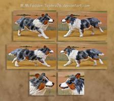 Custom dog figurine- blue merle Shetland Sheepdog by Tephra76