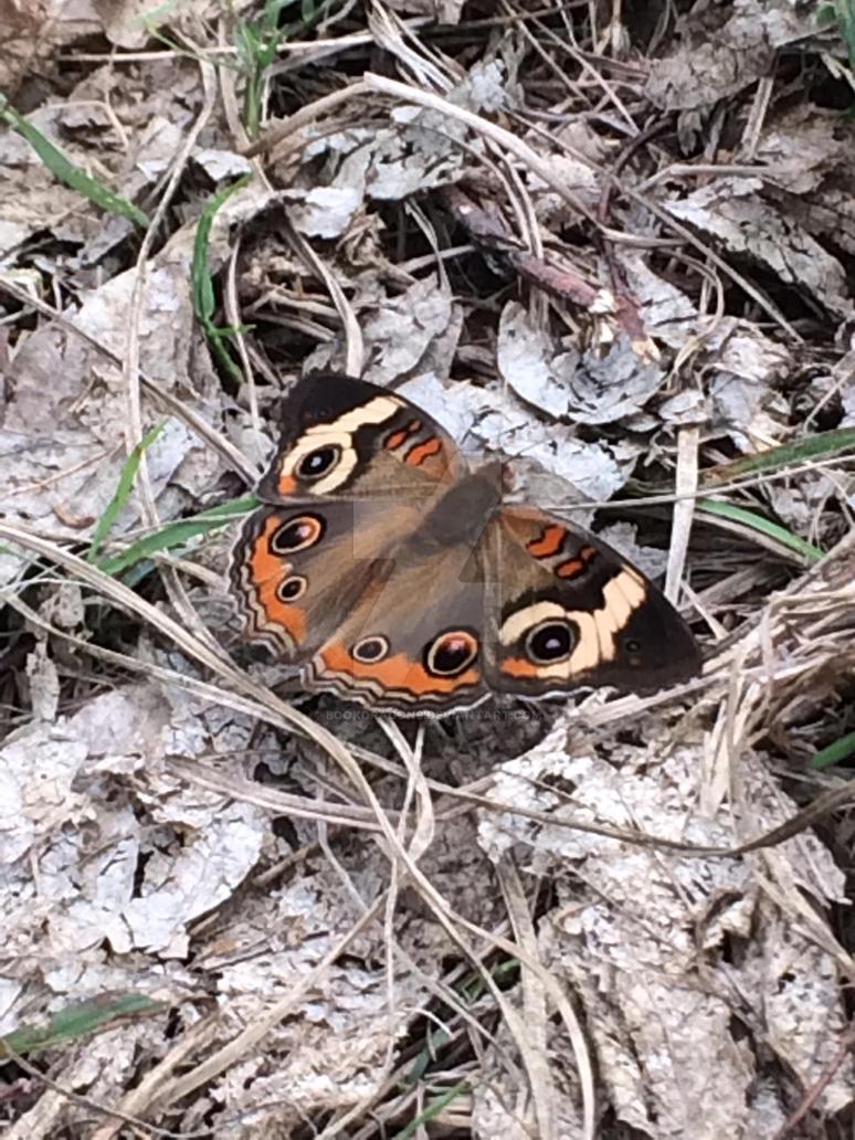 Moth by BookDragon9