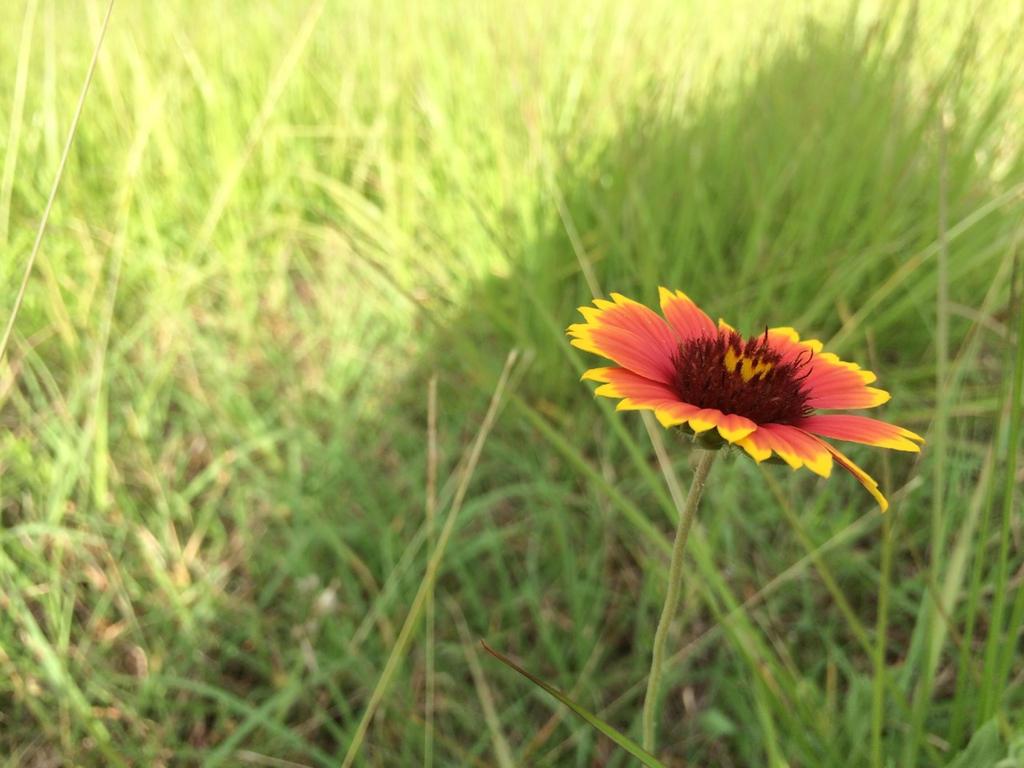 Flower 1 by BookDragon9