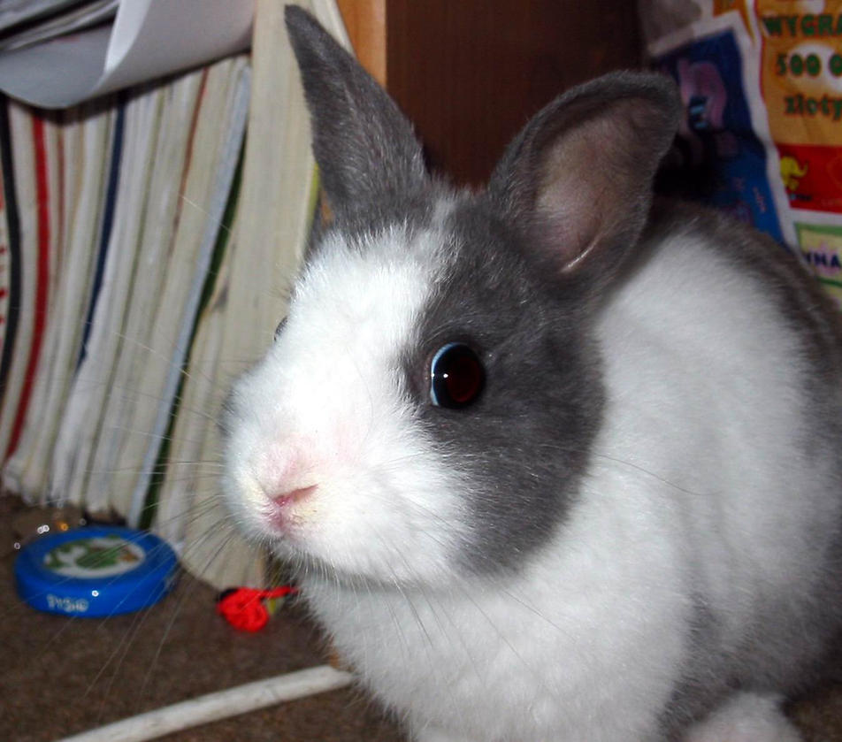 Bunny By Olga Stock by sylveon283