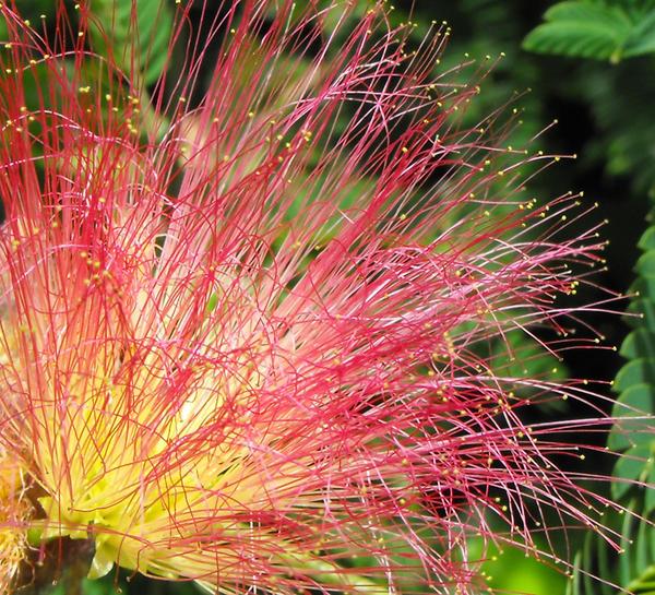 Flower fireworks by floramelitensis
