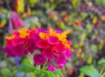 Lantana's Natural Bouquet