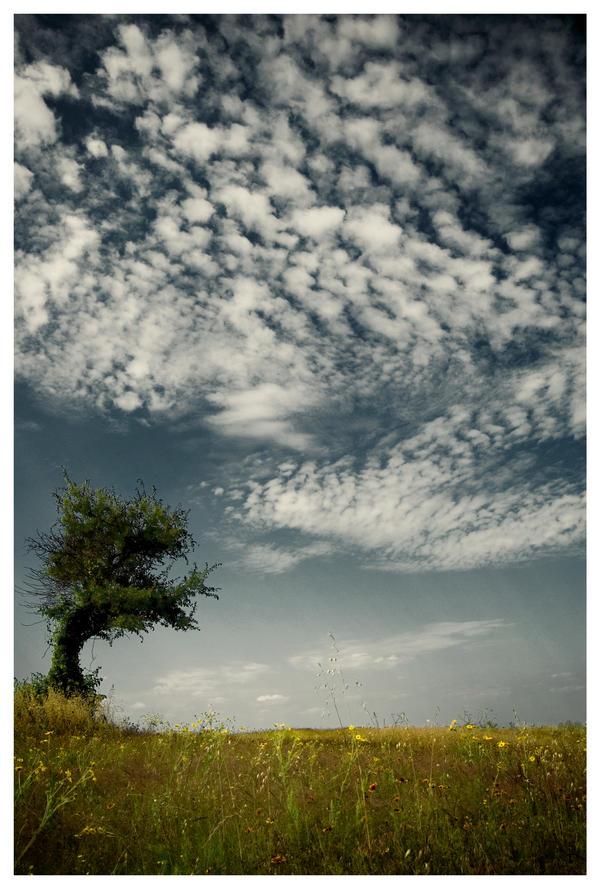Bent Tree by Konijntje
