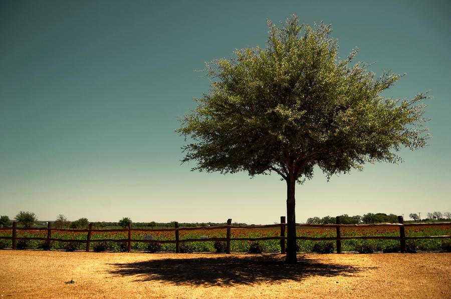 The Tree by Konijntje