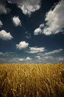 Wheat by Konijntje