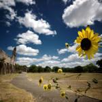 San Juan Sunflower by Konijntje