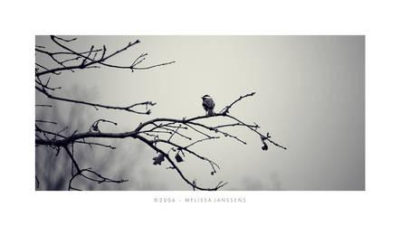 Black Capped Chickadee by Konijntje