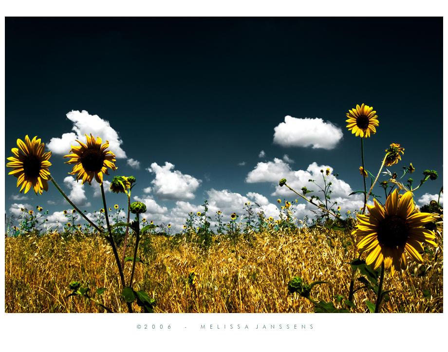 Field of Dreams by Konijntje