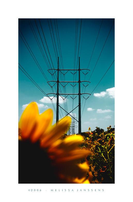 Flower Power by Konijntje
