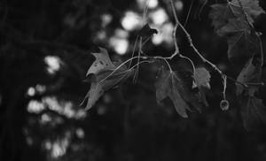 Starting to feel like Autumn