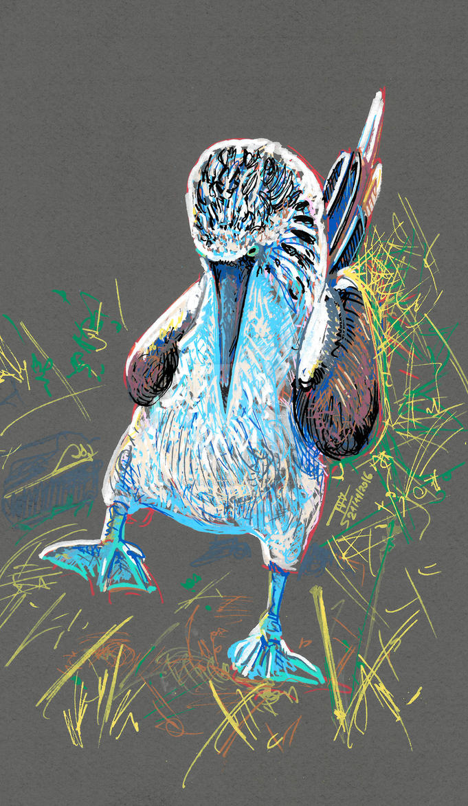 Blue-footed booby by dessinateur777