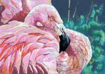 Flamingo by dessinateur777