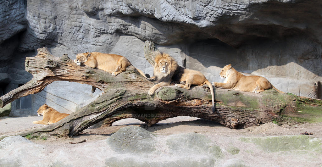Four lions in Hamburg, Germany by Lexvandis